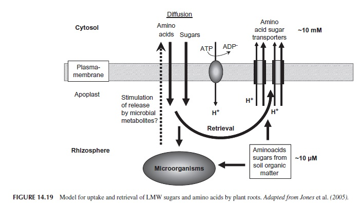 absorción aminoácidos berrymax