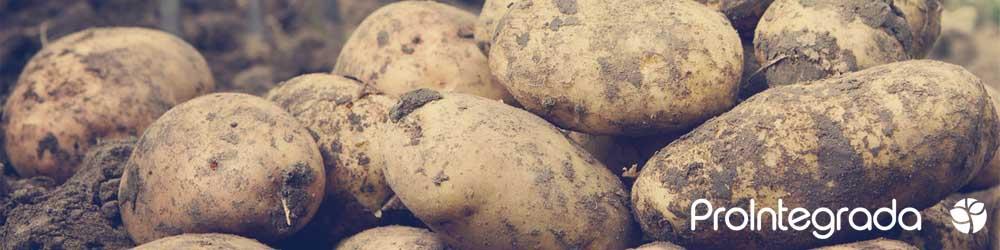 slider patata prointegrada