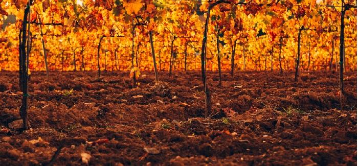 desarrollo de microorganismos en el suelo